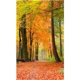 Vliesové fototapety les na jeseň rozmer 150 cm x 250 cm