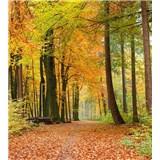Vliesové fototapety les na jeseň rozmer 225 cm x 250 cm