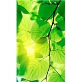 Vliesové fototapety zelené listy rozmer 150 cm x 250 cm