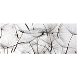 Vliesové fototapety lietajúci púpavy rozmer 375 cm x 150 cm