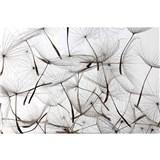 Vliesové fototapety púpavy rozmer 375 cm x 250 cm