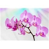 Vliesové fototapety orchidea, rozmer 312 x 219 cm
