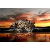 Vliesové fototapety leopard, rozmer 312 cm x 219 cm