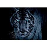 Vliesové fototapety leopard tyrkysové oči