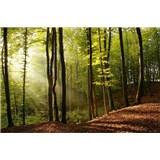 Vliesové fototapety les rozmer 375 cm x 250 cm