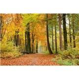 Vliesové fototapety les na podzim rozmer 375 cm x 250 cm