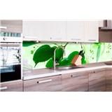 Samolepiace tapety za kuchynskú linku zelené listy rozmer 260 cm x 60 cm