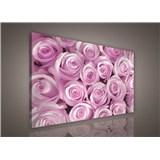 Obraz na stenu ružové ruže 75 x 100 cm