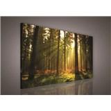 Obraz na stenu les s východom slnka 100 x 75 cm
