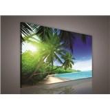 Obraz na stenu palmy 75 x 100 cm