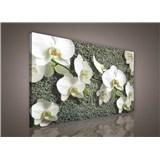 Obraz na stenu biela orchidea na kameni 75 x 100 cm