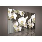 Obraz na stenu biela orchidea 75 x 100 cm