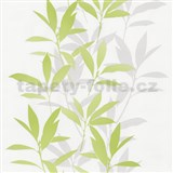 Tapety na stenu Dieter Bohlen - lístie zelené