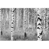 Vliesové fototapety brezy 368 x 248 cm