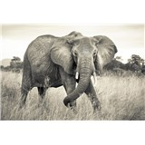 Vliesové fototapety slon 368 x 248 cm