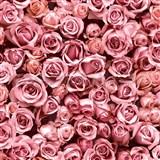 Vliesové tapety na stenu IMPOL Escapade ruže ružové