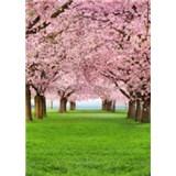 Fototapety Cherry Trees, rozmer 183 x 254 cm