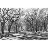 Fototapety Poets Walk NY, rozmer 175 x 115 cm