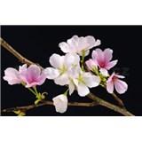 Fototapety Cherry Blossoms, rozmer 175 x 115 cm