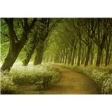 Vliesové fototapety alej stromov 366 x 254 cm