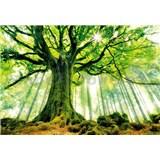 Vliesové fototapety strom v lese, rozmer 366 x 254 cm
