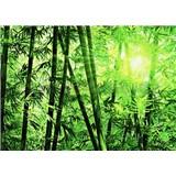 Fototapety Bamboo Forest, rozmer 366 x 254 cm