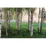 Fototapety Nordic Forest, rozmer 366 x 254 cm