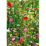 Fototapety Flower Field, rozmer 183 x 254 cm