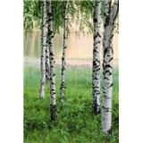 Fototapety Nordic Forest
