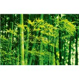 Fototapety Bamboo in Spring