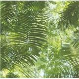 Vliesové tapety na stenu Collage palmové listy