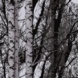 Statická fólia transparentná Wood - 67,5 cm x 15 m