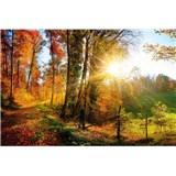 Vliesové fototapety prechádzka lesom rozmer 375 cm x 250 cm