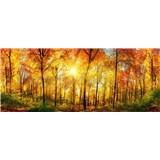 Vliesové fototapety slnečný svit v lese rozmer 375 cm x 150 cm