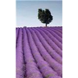 Vliesové fototapety levanduľové polia rozmer 150 cm x 250 cm