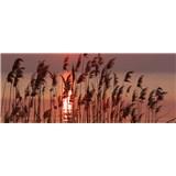 Vliesové fototapety rákosie na jazere rozmer 375 cm x 150 cm