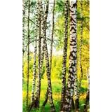 Vliesové fototapety brezový les rozmer 150 cm x 250 cm