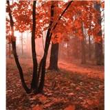 Vliesové fototapety hmlový les rozmer 225 cm x 250 cm