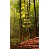 Vliesové fototapety les rozmer 150 cm x 250 cm