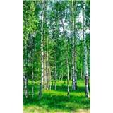 Vliesové fototapety brezy rozmer 150 cm x 250 cm