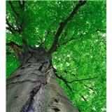 Vliesové fototapety koruny stromov rozmer 225 cm x 250 cm