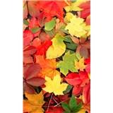 Vliesové fototapety farebný jeseň rozmer 150 cm x 250 cm