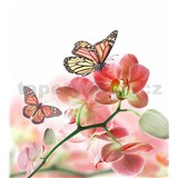 Vliesové fototapety orchidea s motýlmi rozmer 225 cm x 250 cm