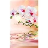 Vliesové fototapety biela orchidea rozmer 150 cm x 250 cm