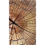 Vliesové fototapety letokruhy kmeňa rozmer 150 cm x 250 cm