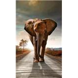 Vliesové fototapety slon rozmer 150 cm x 250 cm