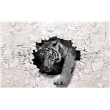Vliesové fototapety biely tyger a 3D stena rozmer 368 cm x 254 cm