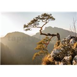 Vliesové fototapety strom na zráze, rozmer 208 cm x 146 cm