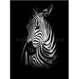 Vliesové fototapety zebra rozmer 184 cm x 254 cm