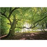 Vliesové fototapety listnatý les rozmer 368 cm x 254 cm